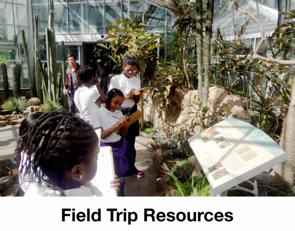 field trip resources -- students looking at desert plants