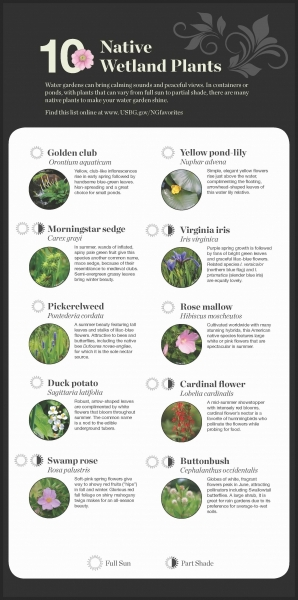 Native Wetland Plant  recommendations