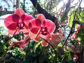 pink orchid with sunlight behind