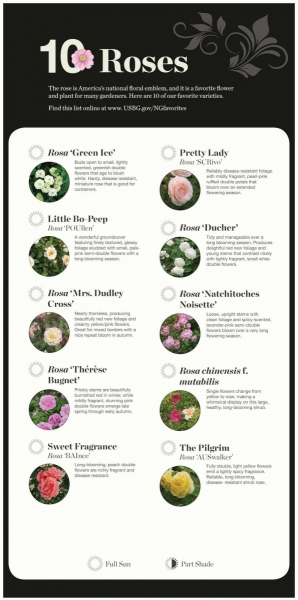 Rose Recommendations