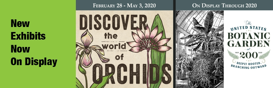 New exhibits - US Botanic Garden at 200, Discover the World of Orchids